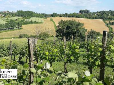 A la découverte de l'agriculture en Chalosse et de ses produits du terroir.